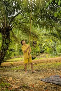 Man working in a palm oil plantation
